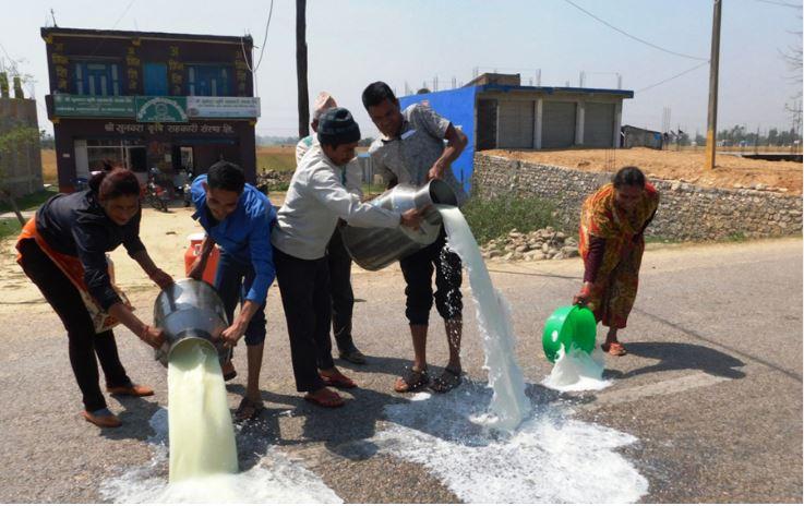 दूध बिक्री नभएपछि सडकमा पोख्दै