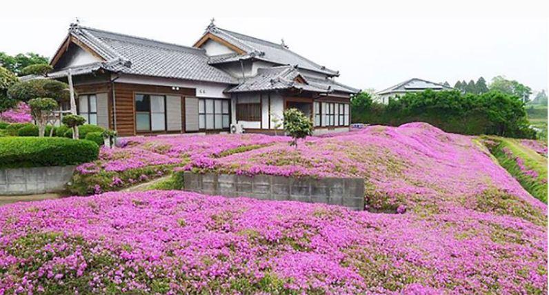 मायाको फूलबारी