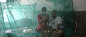 डेंगु प्रकोप : दक्षिण एसियामा एकै भाइरस