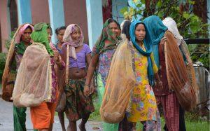 थारू महिला समूह बनाएर माछा मार्न जाँदै